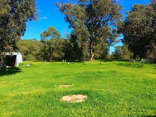Bright green grass and blue skiss, view in Western Australia